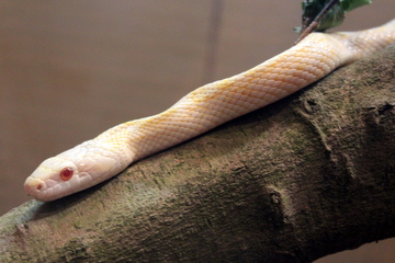 ヘビばっかり見ることができる貴重な機会だ『開運・世界のへび祭り』