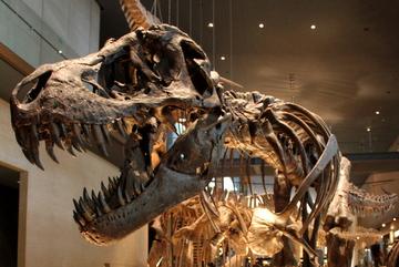 北九州市立いのちのたび博物館にティラノサウルスのスーがやってくるらしいよ