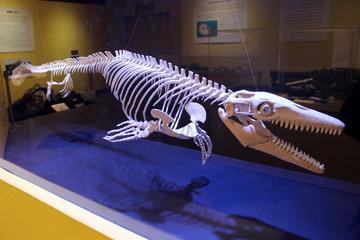 保存状態の凄い和歌山産モササウルス類の化石が観られる。特別展『発見!モササウルス』