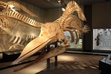 今年の夏の大阪市立自然史博物館の特別展は大阪湾がテーマみたい