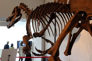 常設展で観られない獣脚類の収蔵標本を多数公開。企画展『迫力の肉食恐竜たち』