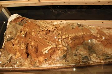 きしわだ恐竜教室特別版「ヨロイ竜の謎を探る!」に行ってきたよ