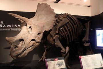来週は大阪のグランフロントで恐竜ウィーク