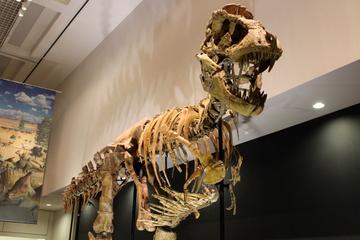 埼玉県立自然の博物館にタルボサウルスの全身骨格が来てるらしいよ