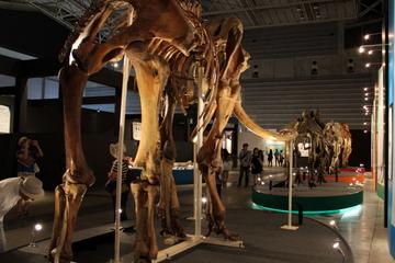 マンモスの冷凍標本を中心に多数の標本を展示。特別展『マンモスYUKA』