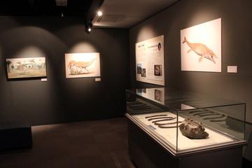 日本産の古生物化石をテーマにした企画展『日本にいた!