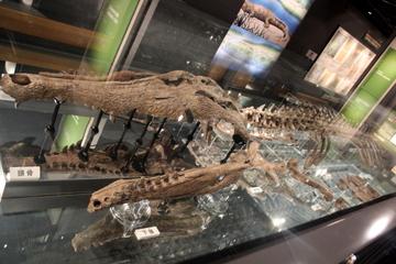 阪大博物館でミュージアムレクチャー『大阪にもいた大きな古生物たち』を聞いてきたよ