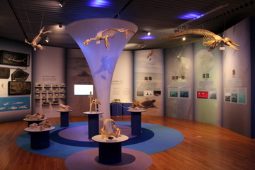 海棲動物の骨格や化石がずらり。企画展『海』