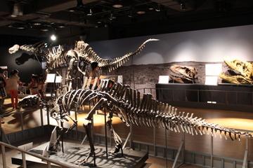 恐竜を図鑑のように分類ごとに陳列して丁寧に解説。『たまがわ恐竜大図鑑展』