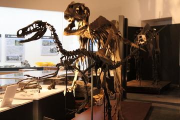 福井県立恐竜博物館の25年の発掘成果を公開。特別展『発掘!発見!1億年の時を越えて』