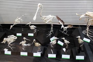 鳥類の骨格について丁寧に解説。企画展『鳥の骨展』