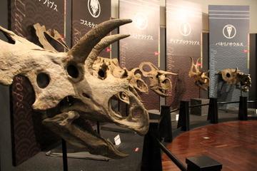 角竜だけに絞ったユニークな恐竜展。特別展『恐竜戦国時代の覇者!トリケラトプス』