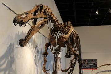 三畳紀の恐竜とスピノサウルス科の恐竜をまとめて展示した企画展『恐竜時代の巨大隕石衝突/スピノサウルス科』