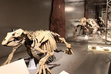 大昔は日本にもこんな動物が生きていたんだ!という感動を覚える特別展『太古の哺乳類展』