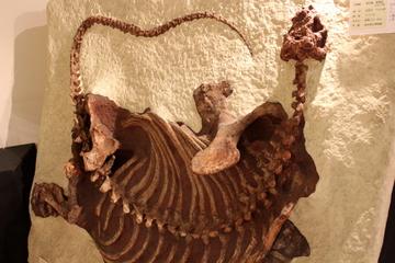 我々哺乳類の祖先、単弓類を取り上げたレアな企画展『単弓類ってしってる?』