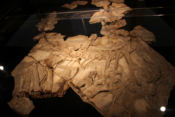 コンカベナトルの実物化石が凄い!貴重なスペイン産化石を集めた特別展『スペイン 奇跡の恐竜たち』