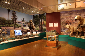 哺乳類化石が中心の見所たっぷりな企画展『マンモスの渡った橋』
