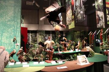 アマゾンの多様な生物標本が一挙に観られる特別展『大アマゾン展』