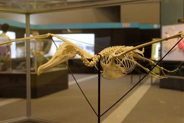 鳥類の飛行のメカニズムについての解説が充実した特別展『天空を制した巨大翼竜と鳥たち』