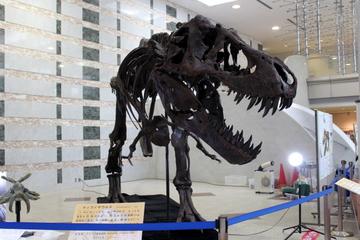 林原の化石コレクションが観られる特別展『生命 過去から未来へ』