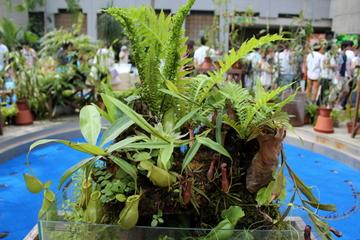 世界中の多様な食虫植物が観られる『虫を食べる植物展』が楽しい。