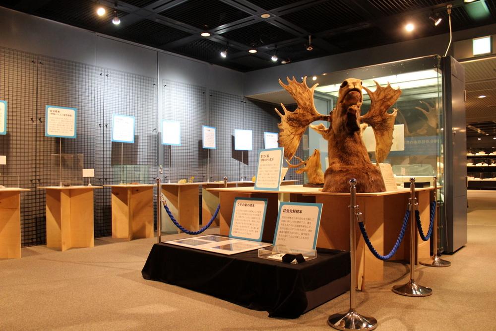 多様な自然史標本の作製手法や利用用途を解説した企画展『学んで魅せる標本展』