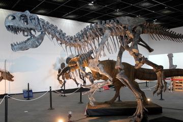 福井県立恐竜博物館の新標本お披露目企画展『New Comer Collections』の充実っぷりが凄かった
