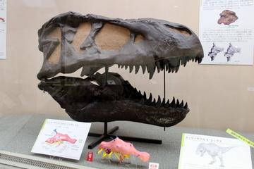 恐竜の「脳」にスポットを当てた斬新な特別展『新・恐竜学』が超面白かった。