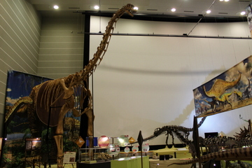 竜脚類の巨大化をテーマにした特別展『メガ恐竜展in豊橋』は迫力ある竜脚類化石でいっぱいだった。