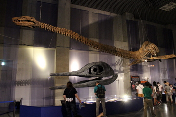 特別展『海のハンター展』は古生物から現生生物まで充実した「海棲脊椎動物図鑑」みたいな展示だった。