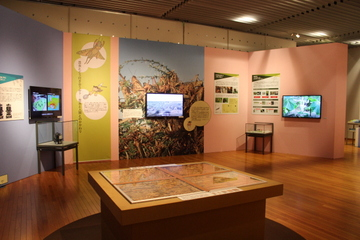 京大博物館の企画展『虫を知りつくす』は、シロアリのコロニーを観察しまくれる天国だった!