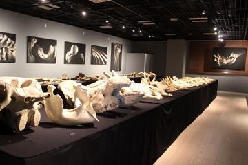 特に解説もなく、でも意図を持って陳列されてる大量の骨のインパクトがすごい『骨を見る 骨に見られる』