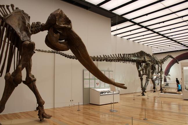 企画展『三重の三億年 変動に生きた巨大生物たち』