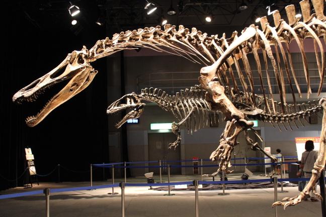 トクシマ恐竜展
