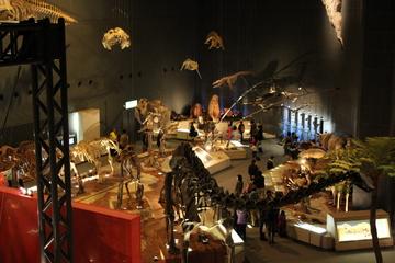 古生物から現生生物まで、多様な標本をこだわりの見せ方で展示。神奈川県立生命の星・地球博物館