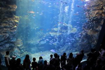 京都の盆地のただ中に位置するオサレな水族館。京都水族館