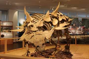 丹波竜化石を中心とした恐竜専門の博物館。丹波竜化石工房