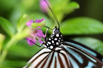 自然豊かな昆陽池公園の中の昆虫館。伊丹市昆虫館