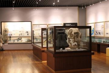 京都大学の貴重な学術標本を展示。京都大学総合博物館