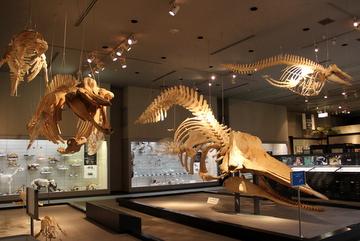 千葉の標本だけで成り立つ広範な展示。千葉県立中央博物館