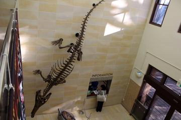 日本初の化石ワニ・マチカネワニの模式標本が観られる。大阪大学総合学術博物館