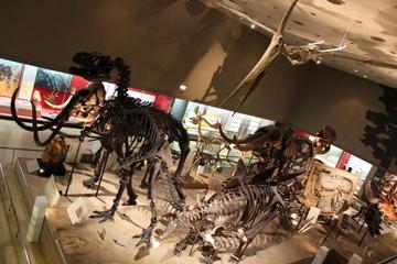 展示自体に歴史を感じる関西最大規模の自然史博物館。大阪市立自然史博物館