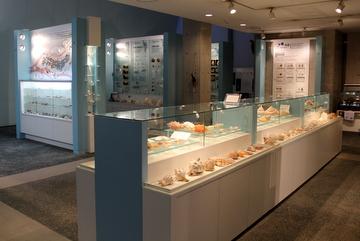 貝類に特化したマニアックでお洒落な博物館。西宮市貝類館