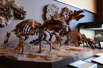 総勢六体ものパレオパラドキシアが凄い。埼玉県立自然の博物館