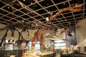古生代・中生代の古生物展示が充実。豊橋市自然史博物館