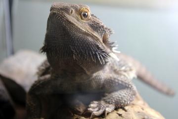 恐竜の実物化石もある、体験型展示中心の施設。板橋区立教育科学館