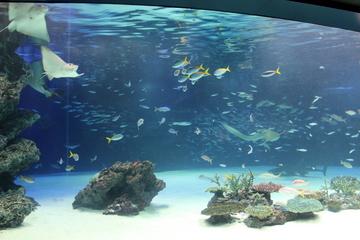 都心のビルの中にどーんと構える水族館。サンシャイン水族館