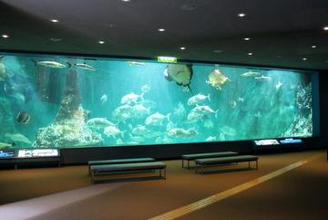 和歌山の海に棲む生物の水族展示中心の博物館。和歌山県立自然博物館