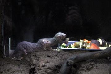 日本でも数少ないハダカデバネズミが観られるでっかい動物園。上野動物園