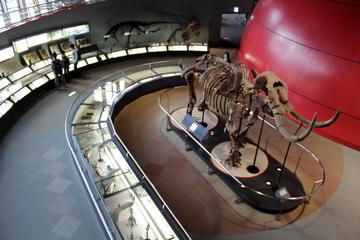 丹波竜化石や新生代の古生物展示が魅力。兵庫県立人と自然の博物館